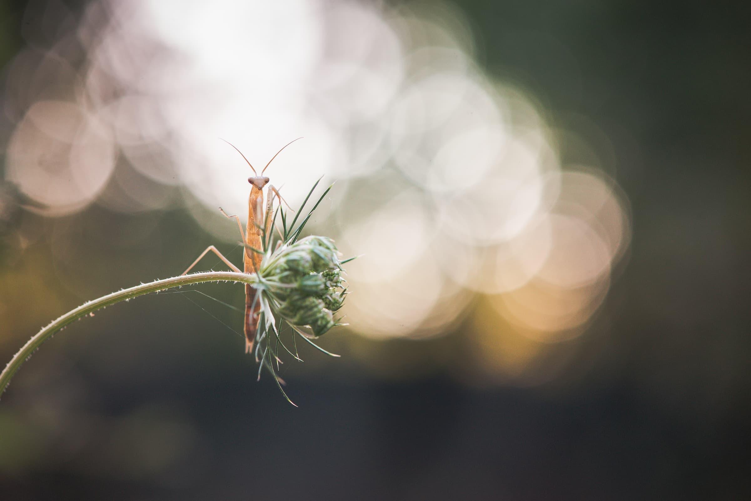 christelle-saffroy-photographie-nature-04