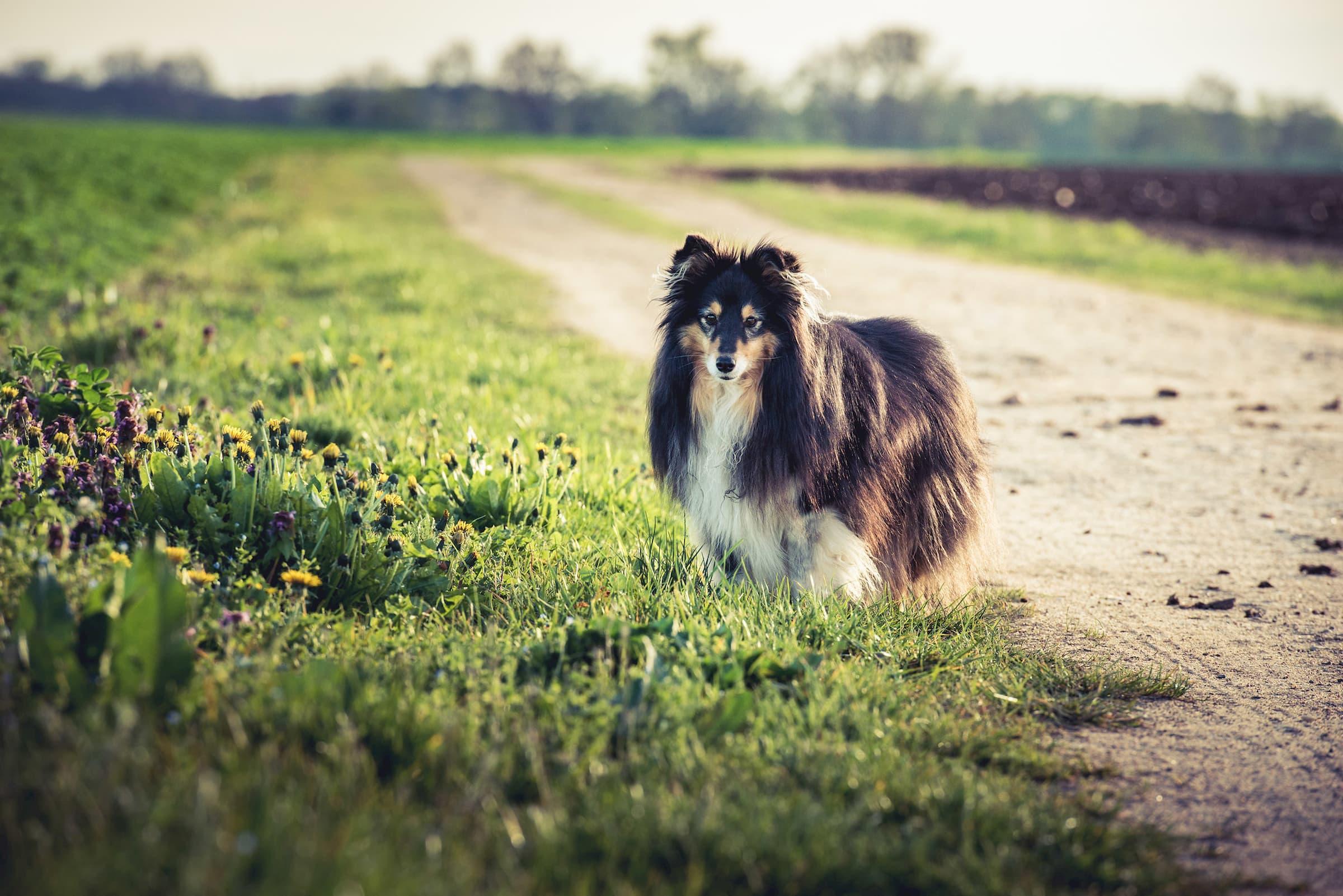 photographie chien christelle saffroy choisir son materiel photo conseil achat